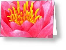 Lily Pad Greeting Card by Maureen  McDonald