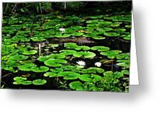 Lily Pad Turtle Camo Greeting Card
