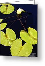 Lily Pads And Lotus Blossom Greeting Card