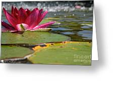 Lily Pads And Petals Greeting Card