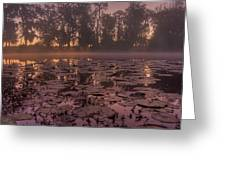 Lily Pads In The Fog Greeting Card