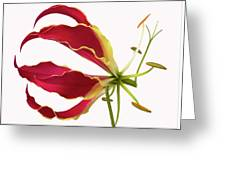 Lily Still Life 4 Greeting Card
