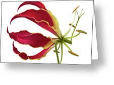 Lily Still Life 5 Greeting Card