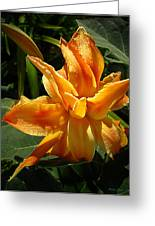 Lily Survival Greeting Card