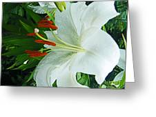 Lily Thuya Garden Me Greeting Card
