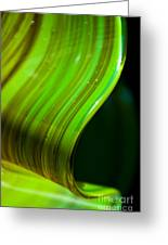 Lime Curl Greeting Card