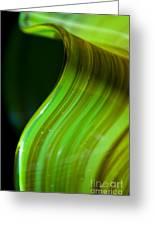 Lime Curl Ll Greeting Card by Dana Kern
