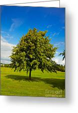 Lime Tree In Summer Greeting Card