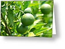 Limes Greeting Card