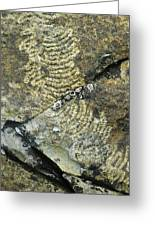 Limpet Trails Greeting Card