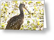 Limpkin Luster Greeting Card