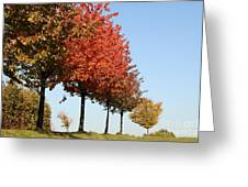 Line Of Autumn Trees Greeting Card