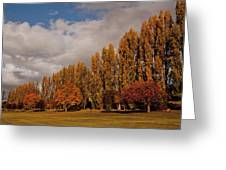 Line Of Trees Greeting Card
