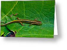 Lined Salamander 2 Greeting Card
