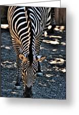 Lines             Zebra Greeting Card