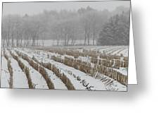Lines In The Snow Greeting Card by Odd Jeppesen