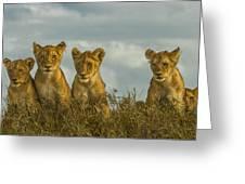 Lion Cubs Serengeti National Park Greeting Card