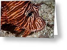 Lionfish Portrait Greeting Card