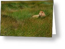 Lion In The Grass Greeting Card