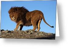 Lion On The Skyline Greeting Card
