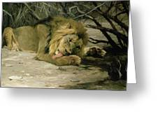 Lion Reclining In A Landscape Greeting Card