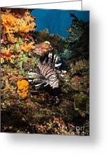 Lionfish, Fiji Greeting Card