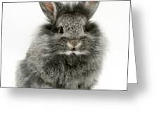 Lionhead Rabbit Greeting Card