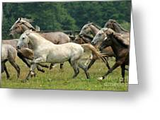 Lipizzan Horses Greeting Card