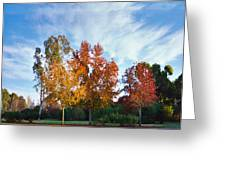 Liquid Amber Trees Greeting Card