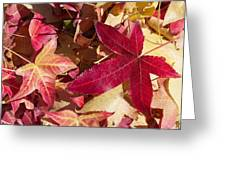 Liquidambar Autumn Greeting Card