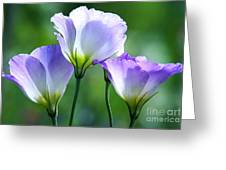 Lisianthus Number 5 Greeting Card