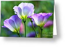 Lisianthus Number 6 Greeting Card