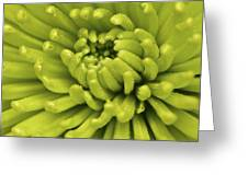 Littered With Pollen Greeting Card by Pixel Perfect by Michael Moore