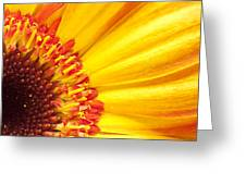 Little Bit Of Sunshine Greeting Card