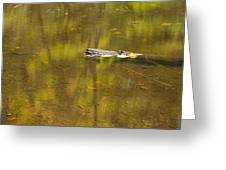 Little Carp River Bed 1 Greeting Card