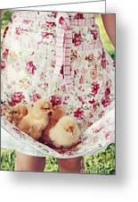 Little Chicks Greeting Card