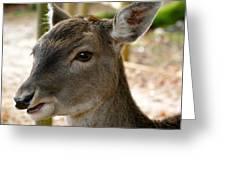 Little Deer Greeting Card by Karen Grist