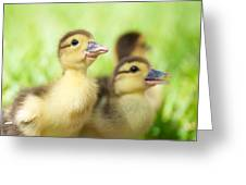 Little Duck. Greeting Card