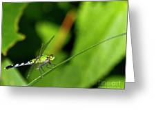 little Green wings Greeting Card