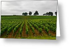Little Hill In The Vineyard Greeting Card