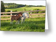 Little Horses At Pasture Greeting Card