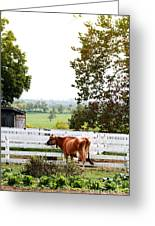 Little Jersey Cow Greeting Card by Stephanie Frey