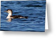 Little Loon Greeting Card