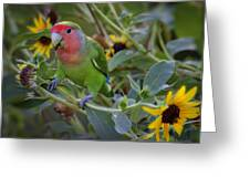 Little Lovebird Greeting Card