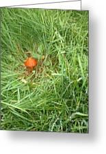 Little Orange Mushroom Greeting Card