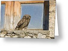 Little Owl Athene Noctua On Window Greeting Card