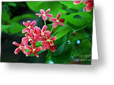 Little Pink Chinese Honeysuckle Flowers  Greeting Card