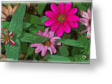 Little Pinks Greeting Card