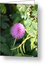 Little Purple Bloom Greeting Card