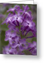 Little Purple Flowers Greeting Card